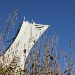Der Turm hinterm Gras
