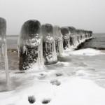 Eingefrorene Holzpflöcke